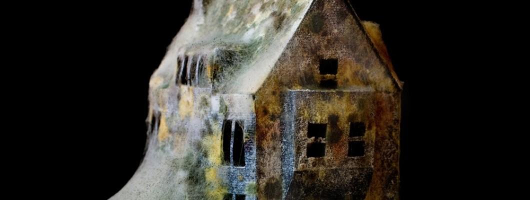 Naš dom, varno prebežališče, ali gojišče plesni in bakterij?